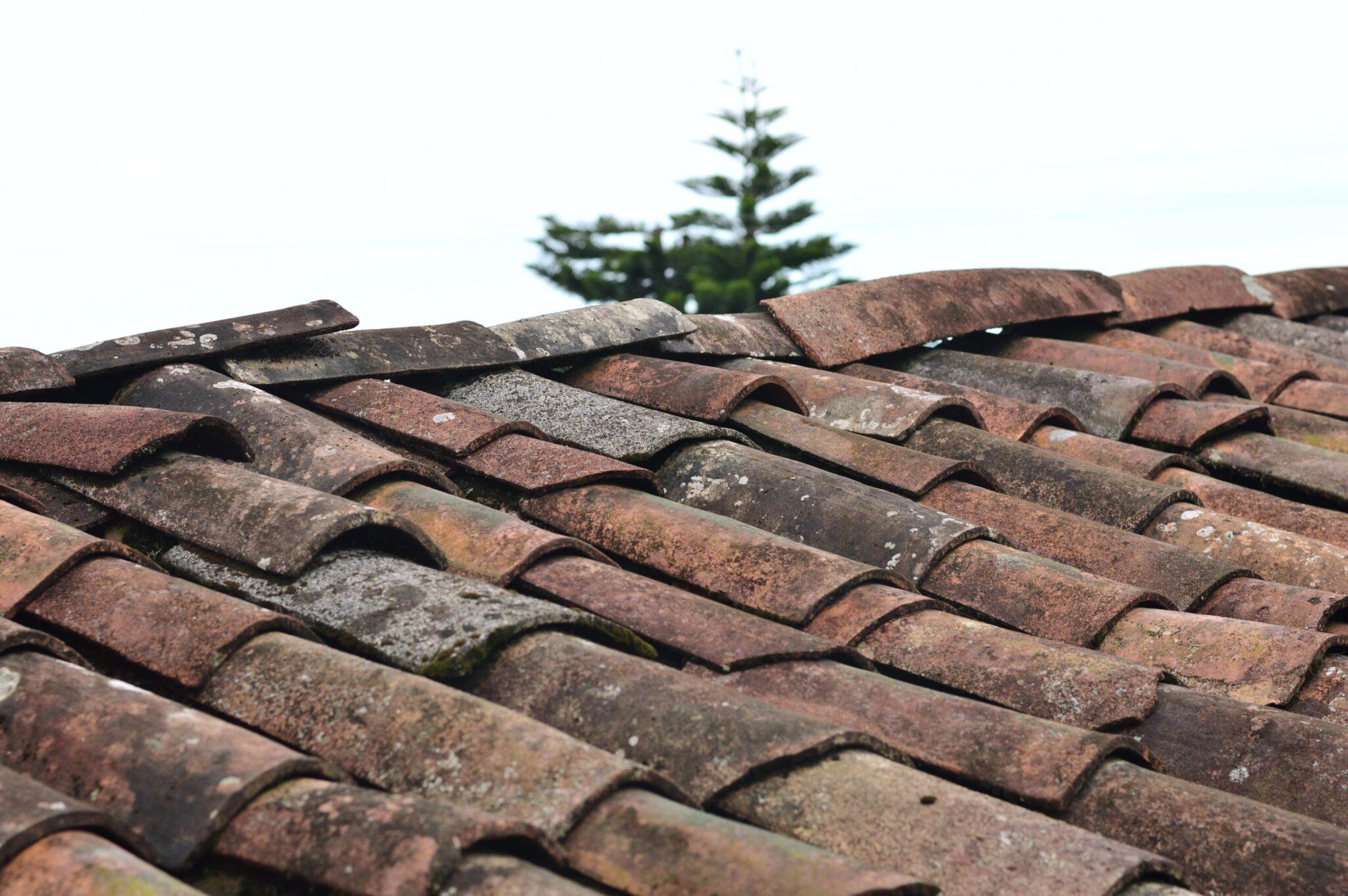 Alger på taget – hvad er det egentlig, og hvorfor bør du fjerne det?